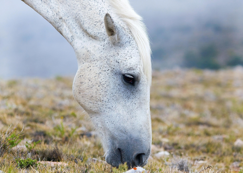 фото головы белого коня моя жизнь сон
